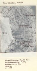 Hoftüpfel bei Pinus silvestris #2 - Pinus silvestris, gemeine Kiefer, Waldkiefer, Baum des Jahres 2007, Zellwand, Hoftüpfel, Porus, Torus, Margo-Fäden, Stofftransport
