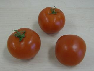 Tomaten - Tomaten, Nachtschattengewächs, rot, Gemüse, Frucht, drei
