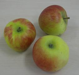 Äpfel - Apfel, Äpfel, Kernobstgewächs, Rosengewächs, Obst, Frucht