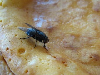 Stubenfliege - Fliege, Stubenfliege, Hautflügel, Netzaugen, eklig, Hygiene, Rüssel