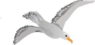 Möwe - Möwe, Meer, fliegen, Vogel, grau, weiß