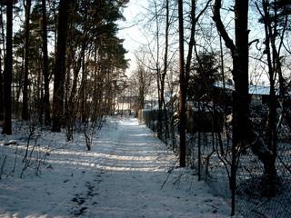 Weg im Winter - Weg, Schnee, Winter, Wald, Perspektive, Fluchtpunkt