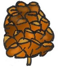 Bockerl - Zapfen - Baum, Frucht, Kiefer, Föhre, Zapfen, Blütenstand, braun, Herbst, Anlaut Z
