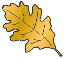 Eichenblatt 2 - Pflanzen, Blatt, Eiche, Pflanzenteile, Herbst, Baum, Anlaut B