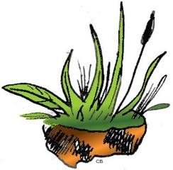 Gras - Gras, Grashalm, Wiese, Grassode, Boden, Anlaut G