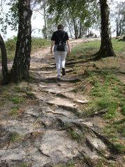 Weg - Natur, Weg, Landschaft, Symbol, bergauf, Wurzeln, Aufstieg, Meditation