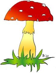Fliegenpilz - Fliegenpilz, Pilz, Schwammerl, Wald, Biologie, Pflanze, Natur, Märchen, giftig, Anlaut P