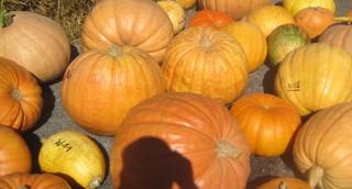 Kürbisse - Kürbis, Gemüse, Herbst, orange, Erntedank