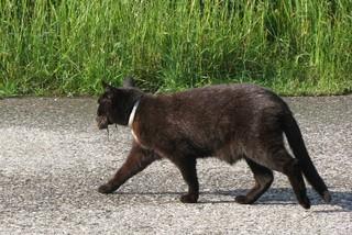 Katze mit Maus - Katze, Maus, Beute, fangen, jagen, fressen