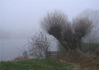 Weide - Weide, Kopfweide, Laubbaum, Nebel, Winter, kalt, nebelig, still, unheimlich, See, Erzählanlass, Schreibanlass