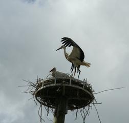 Storchennest #2 - Storch, Nest, Brutstätte, Schornstein, Adebar, Turm, Vogel, Schreitvogel, Zugvogel, Weißstorch