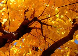Herbst - Herbst, Jahreszeit, Blätter, Baum, Laub, bunt, Baumkrone, färben, Verfärbung