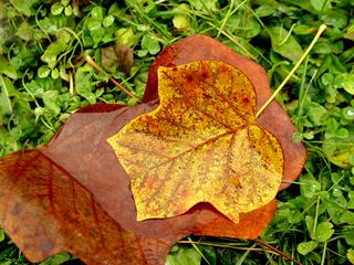 Herbst - Herbst, Blatt, Farbe, Regen, Jahreszeit, Blätter, Laub, Verfärbung, färben