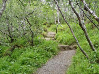 Wege#5 - Wege, Weg, Jahreszeiten, Wald, Meditation, Mischwald, Alaskabirke