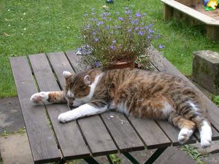Faulenzender Kater - Kater, Katze, Haustier, Säugetier, Faulenzen, Entspannen, Schreibanlass