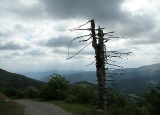 Toter Baum - Vergänglichkeit, Baum, Schreibanlass, Meditation, Himmel, Wolken, Wolkenformationen