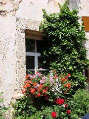 Fenster - Fenster, Glas, Blumen, Erzählanlass, Kalenderbild, Meditation, Schreibanlass, verwachsen, wuchern