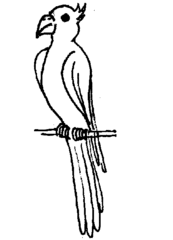 Papagei - Papagei, Illustration, Anlaut P, Vogel