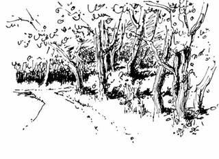Weg - Weg, Bäume, Waldrand, Skizze