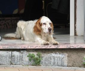 Hund - Hund, wachsam, Haustier