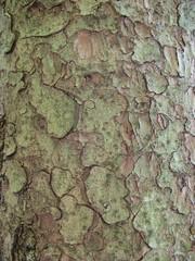 Rinde #1 - Rinde, Stamm, Fichte, Oberfläche, Struktur, rau