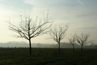 Novembernebel - Nebel, kahl, November, trist, Herbst, Vergänglichkeit, Meditation, Schreibanlass, Meteorologie, Wetter, Wettererscheinung, Wassertröpfchen, Kondensation, Taupunkt, Wasserdampf