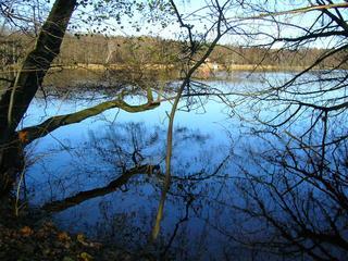Summter See in Brandenburg (2) - Herbst, See, Seeufer, kahle Bäume, Schilfbewuchs, Sonne, Einsamkeit, Meditation, Wasserspiegelung, Rundweg, Wanderweg