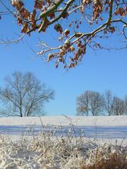 Winterlandschaft #1 - Winterlandschaft, Winter, Schnee, kahle Bäume, Sonne, Schneelandschaft, Kälte, Einsamkeit, Ruhe, Stille, Schreibanlass, Meditation