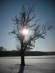 Winterimpressionen #3 - Winterlandschaft, Winter, Schnee, kahle Bäume, Sonne, Schneelandschaft, Kälte, Einsamkeit, Ruhe, Stille, Schreibanlass, Meditation, Gegenlicht