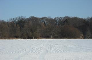 Winterimpressionen #5 - Winterlandschaft, Winter, Schnee, kahle Bäume, Sonne, Schneelandschaft, Kälte, Einsamkeit, Ruhe, Stille, Schreibanlass, Meditation