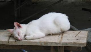 schlafende Katze - Katze, Haustier, Säugetier, Faulenzen, Entspannen, Schreibanlass