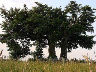 Bäume im Sommer - Laubbaum, Sommer, wachsen, Blätter, Blatt, Stamm, Äste, verzweigt, Laub