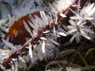 Raureif an Gras - Reif, Kristalle, Winter, Impression, Raureif, Niederschlag, Resublimation, nadelförmig, Eiskristall, Eisnadeln, Wetter, Niederschlag, Physik