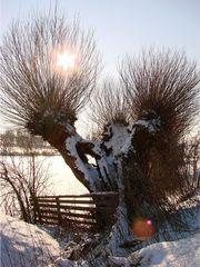 Weiden im Winter #2 - Weide, Laubbaum, kahl, kalt, Winter, Schnee, Weiher, Gegenlicht, Sonne, Kopfweide, Fluss, Kalenderbild, Meditation, Weidengewächs, Laubgehölz, Bodenbefestigung, Heilpflanze