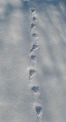 Spuren #9 - Abdruck, Spur, Bläßhuhn, Trittsiegel, Fußabdruck, Schnee