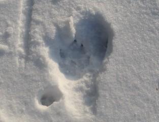 Spuren #12 - Abdruck, Katze, Hund, Fußabdruck, Trittsiegel, Schnee