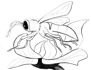 Biene - Biene, Insekt, Flügel, Hautflügel, Blüte, Illustration, bee, Anlaut B