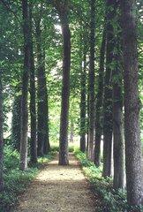 Baum im Weg - Baum, Hindernis, schmal, Baumstämme, Stamm, Mahnmal, Baumallee, Allee, Weg, Perspektive, zweiter Weltkrieg, Judenverfolgung
