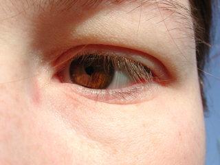 Auge 1 - Auge, Iris, Sinne, braun, sehen, Wimpern, Lid
