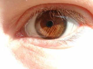 Auge 2 - Auge, Iris, Sinne, sehen, braun, Pupille, Wimpern, Lid