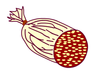 Salami - Wurst, Nahrungsmittel, Anlaut W, Salami, Anlaut S