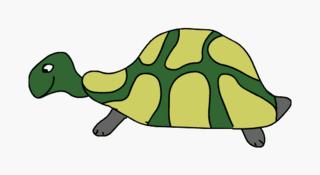 Schildkröte - Natur, Tier, Reptilien, Schildkröte, Kiefermäuler, Wirbeltier, Landwirbeltier, Panzer, Haustier, Landschildkröte, Reptil, Schuppen, Winterruhe, langsam, Keratin, bedroht, Schildpatt, Artenschutz, Washingtoner Abkommen, Anlaut Sch, Illustration