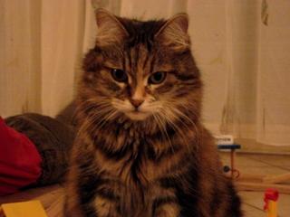 Katze - Tier, Haustier, Katze, Hauskatze