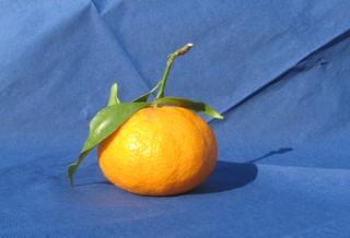 Mandarine - Mandarine, Kontrast, Komplementärkontrast, orange, blau, Obst, Zitrusfrucht, Rautengewächs, Nahrungsmittel