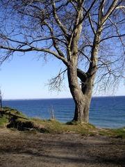 Brodtener Steilufer #3 - Ostsee, Steilufer, Abbruchkante, Abbruch, aktives Kliff, Baum, Strand, Lübecker Bucht, Niendorf, Travemünde