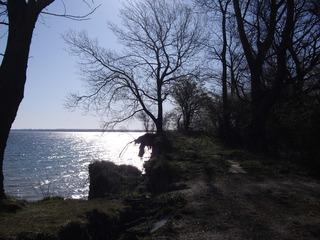 Brodtener Steilufer  #5 - Ostsee, Steilufer, Abbruchkante, aktives Kliff, Baum, Strand, Lübecker Bucht, Niendorf, Travemünde, Gegenlicht, Ufer, Meer