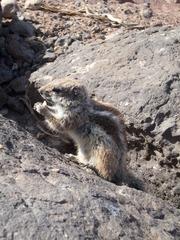 Streifenhörnchen #1 - Tiere, Nager, Fell, braun, grau, Säugetiere, klein, flink, Streifen, freilebend, Futter, zahm, zutraulich, Tarnung, Tarnfarbe