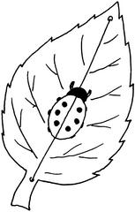 Krabbelkäfer - Käfer, Blatt, Bastelarbeit, Illustration, Marienkäfer