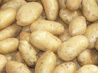 Kartoffel #1 - Kartoffel, Speise, Knolle, Ernte, frisch, Schale, Stärke, hellbraun, eiförmig, groß, klein, Garten, Anbau, Grundnahrungsmittel, Erdapfel, Speisekartoffel, Nahrungsmittel, Beilage