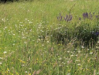 Naturbelassene Wiese #2 - Wiese, Blumen, Blüten, Gräser, Unkraut, grün, Frühling, blühen, Garten, Natur, Kräuter